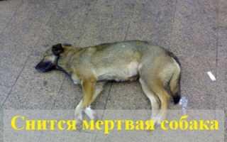 К чему снится мертвая собака: расшифровка по различным сонникам
