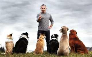 Толкование сонника: к чему снится стая собак