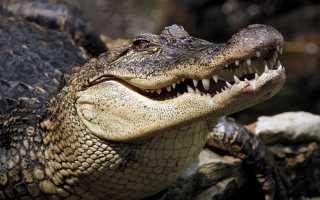 К чему снится крокодил: толкования для женщин и мужчин