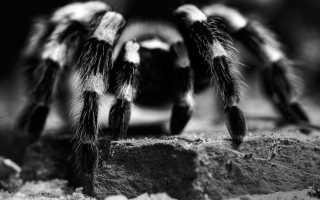Паук в доме: народные приметы и суеверия