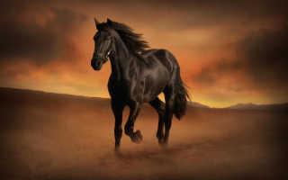 К чему снится лошадь женщине и мужчине, толкования по сонникам