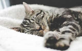 К чему снится мертвая кошка: толкования сонников