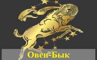 Овен, рожденный в год Быка: гороскоп для женщин и мужчин