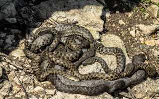 К чему снится много змей по различным сонникам?