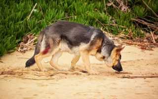 Что, согласно сонникам, означает приснившаяся раненая собака?