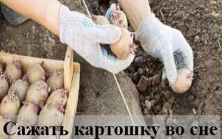 Сажать картошку во сне: толкования на основе деталей сновидения