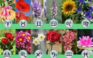 Цветочный гороскоп по дате рождения и знаку Зодиака