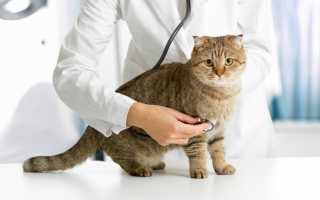 Как трактуется сонником сновидение с больной кошкой