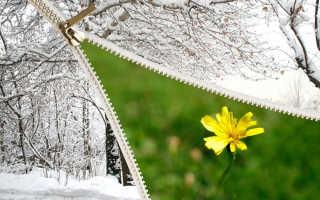 К чему снится лето зимой по различным сонникам?