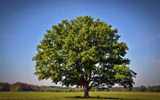 Сонник: к каким событиям в жизни снится дерево?
