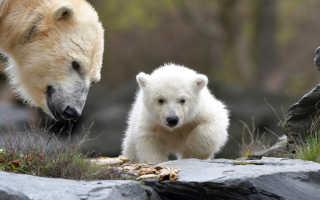 Приснился медвежонок женщине и мужчине: трактовка сновидения
