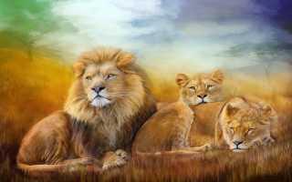 Характеристика Льва, рождённого в год Тигра