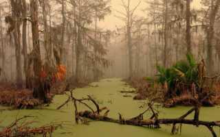 К чему снится болото: толкования популярных сонников