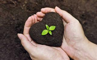 К чему снится плодородная или каменистая земля?