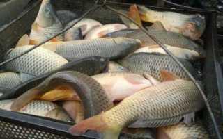 К чему снится свежая рыба — толкование по сонникам