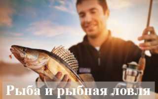 К чему мужчине снится рыба и рыбная ловля