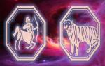 Стрелец-Тигр: характеристика мужчины и женщины, совместимость в отношениях