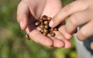 Сонник: к чему снится майский или колорадский жук?