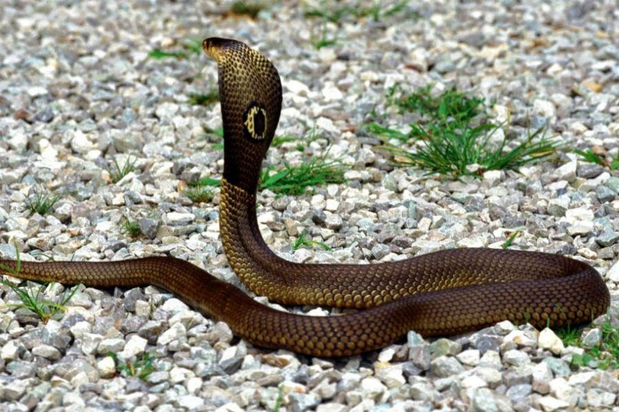 Что предвещает для мужчины появление змей во сне?