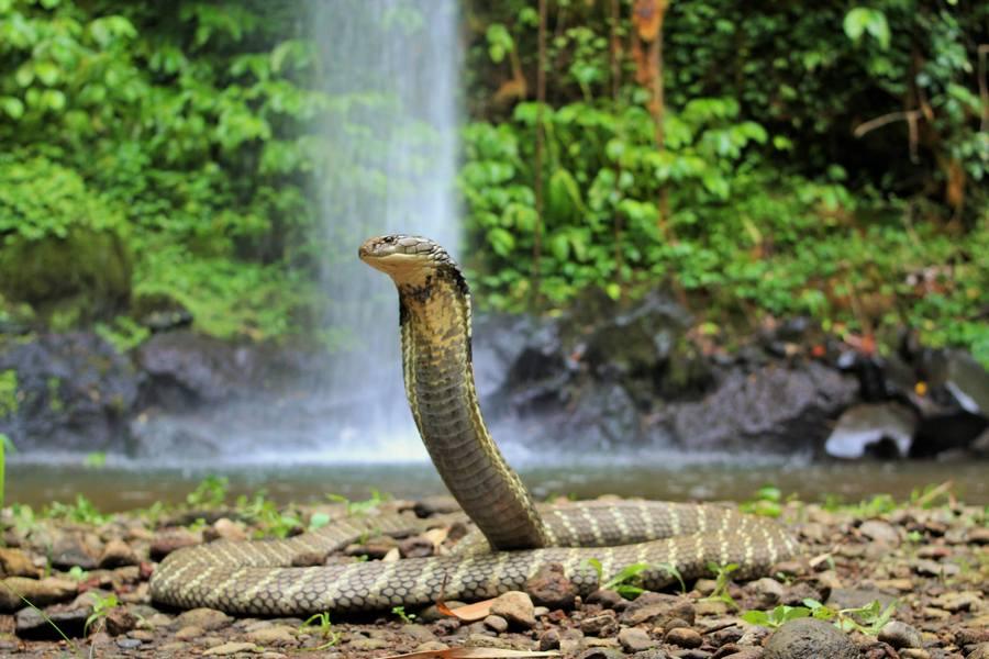 Что ждёт человека, которому приснилась змея?