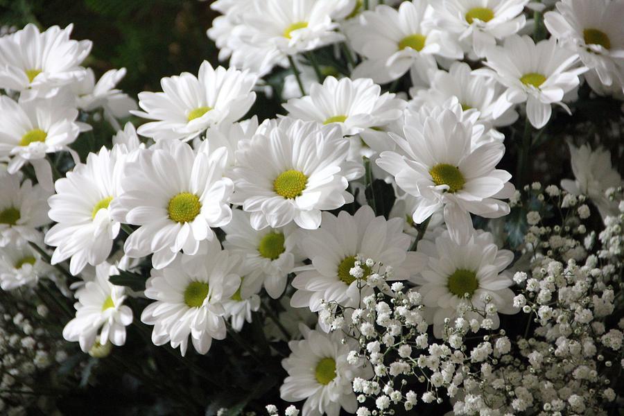 Что значат белые цветы во сне — толкования известных сонников