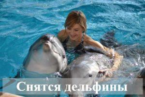 К чему человеку снятся дельфины?