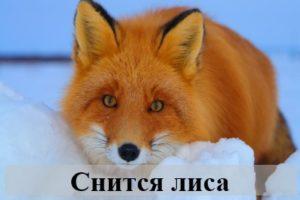К чему готовиться наяву, если снится лиса?