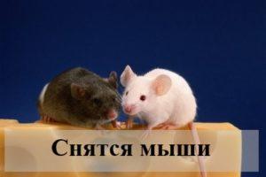 К чему могут присниться мыши: толкования по сонникам