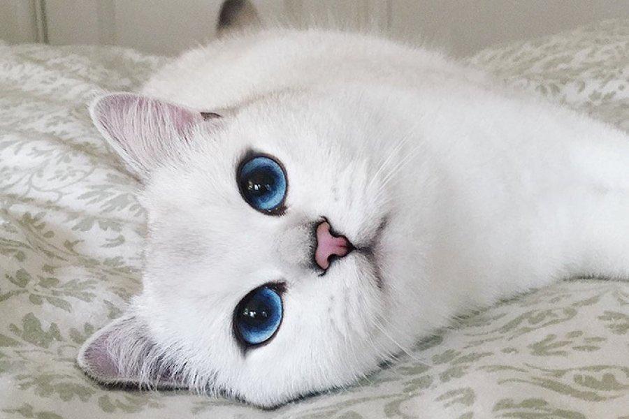 К чему снится белый кот мужчине и женщине?