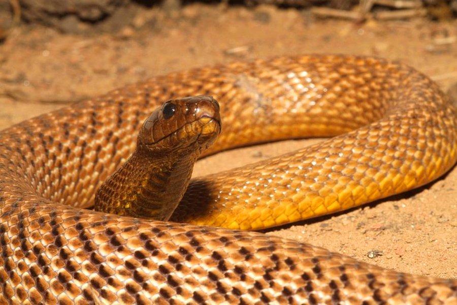 К чему снится большая змея?