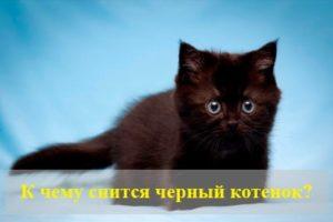 К чему снится черный котенок?
