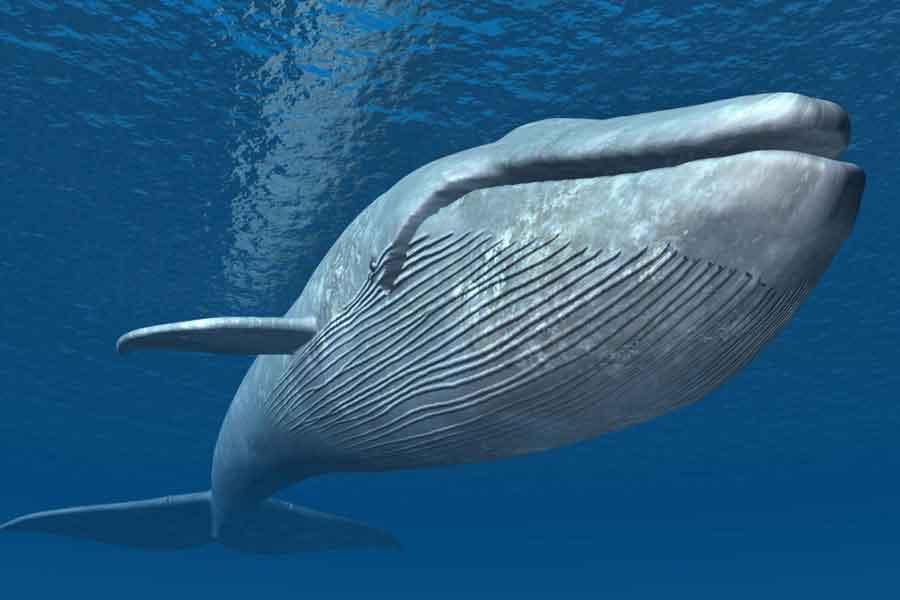 К чему снится кит согласно различным сонникам?