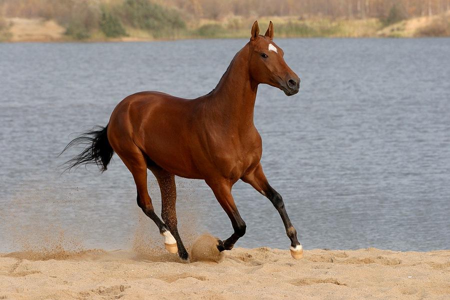 К чему снится коричневая или черная лошадь женщине?