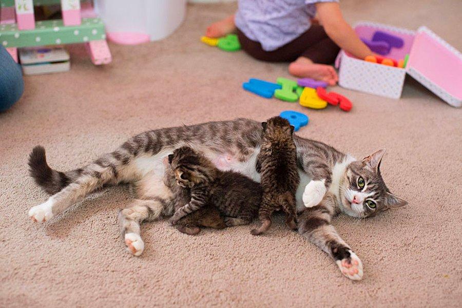 К чему снится кошка, которая родила котят?