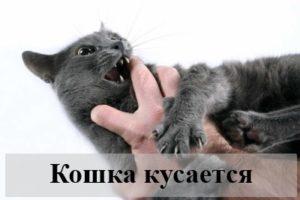 К чему снится кошка, которая царапается и кусается?