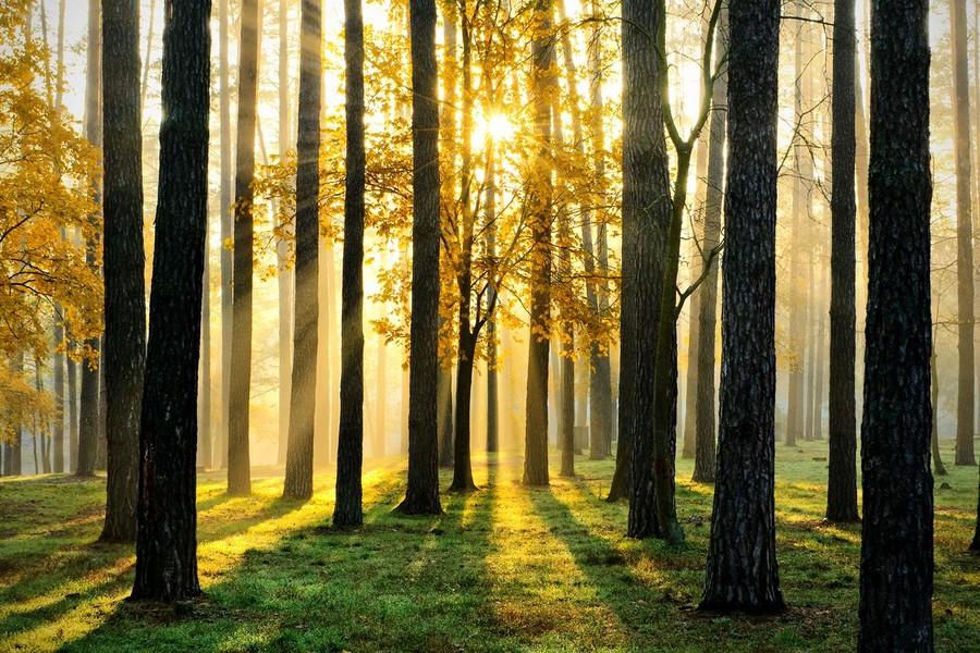 К чему снится лес: трактовка в популярных сонниках