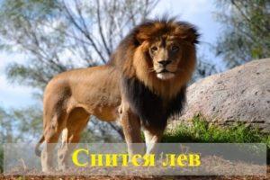 К чему снится лев: толкование сна популярными сонниками