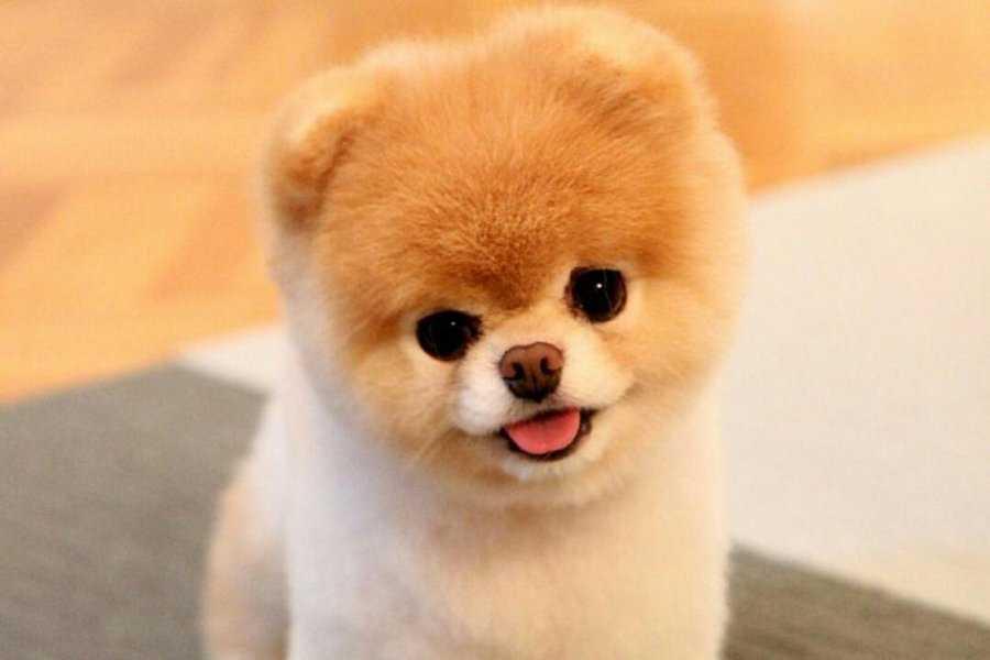 К чему снится маленькая собачка согласно различным сонникам?