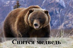 К чему снится медведь: трактовка сновидения различными сонниками