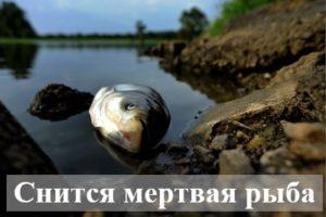 К чему снится мертвая рыба?