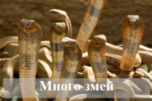 К чему снится много змей по различным сонникам
