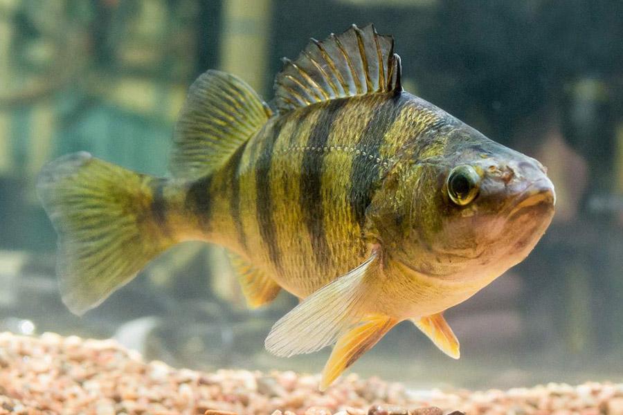 К чему снится рыба: различные толкования сонника для мужчин и женщин