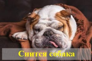 К чему снится собака: толкование сновидения