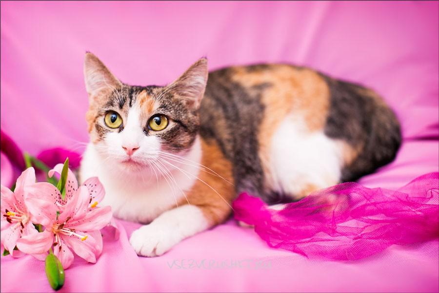 К чему снится трёхцветная кошка: толкование по сонникам?