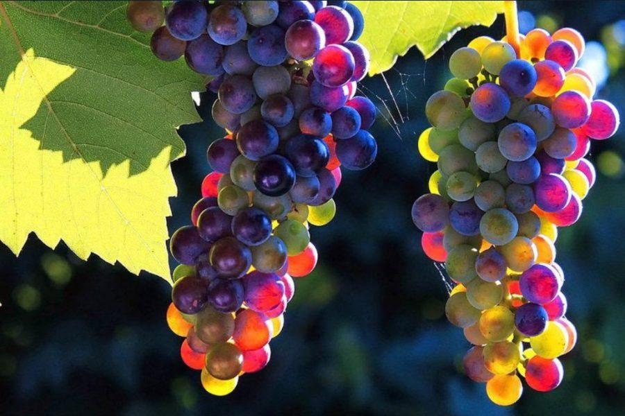 К чему снится виноград женщине и мужчине?