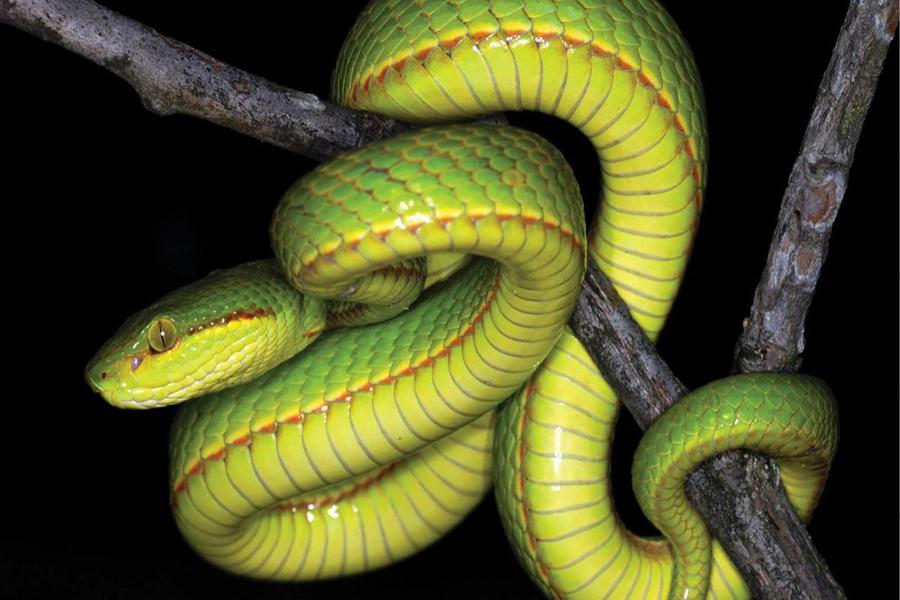 К чему снится зелёная змея — толкование по сонникам