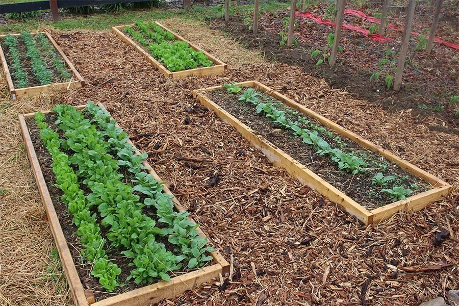 К чему снятся грядки в огороде — толкование по самым популярным сонникам