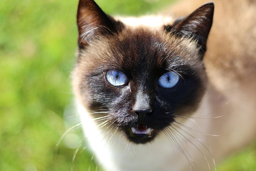 К чему снятся кошки — толкование видения в известных сонниках