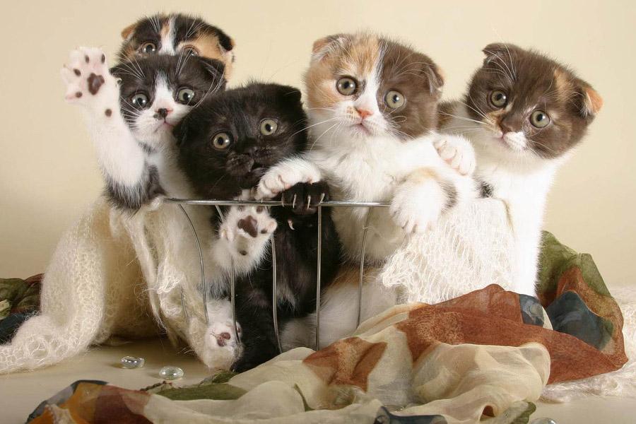 К чему снятся котята разного цвета мужчине и женщине?