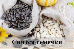 К чему снятся подсолнечные или тыквенные семечки?